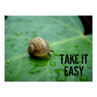 Baby Snail On Leaf With Waterdrops Poster