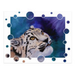 Baby Snow Leopard Bubbles Postcard