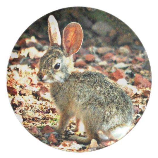 Baby Sonoran Bunny Melamine Plate