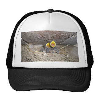 baby sparrows really crying trucker hats