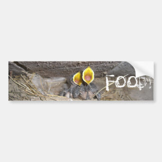 baby sparrows really hungry bumper sticker