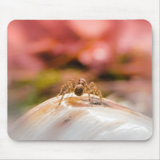 Baby Spider's First Day Mouse Pad
