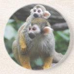 Baby Squirrel Monkey  Coaster