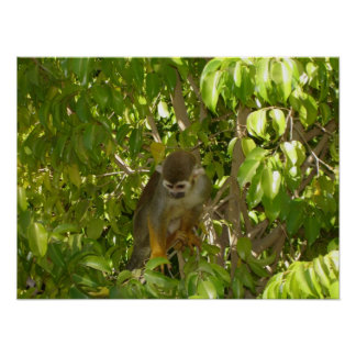 Baby Squirrel Monkey Poster