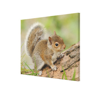 Baby Squirrel Sitting On Tree Trunk Canvas Print