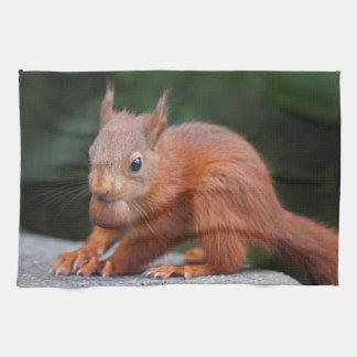 Baby Squirrel with Nut Kitchen Towel