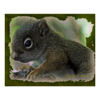 baby squirrell posters