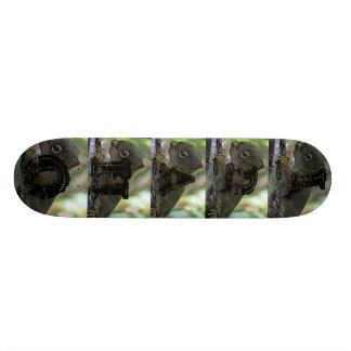 baby squirrell skate decks
