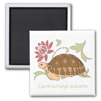 Baby Sulcata Tortoise Magnet (floral)