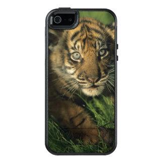 Baby Sumatran Tiger OtterBox iPhone 5/5s/SE Case
