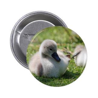 Baby swan 6 cm round badge
