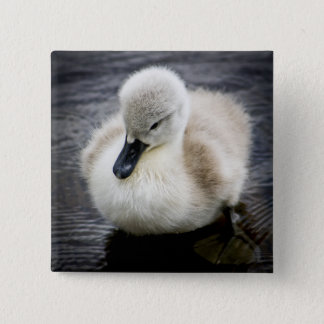Baby Swan (Cygnet ) 15 Cm Square Badge