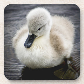 Baby Swan | Cygnet Coaster