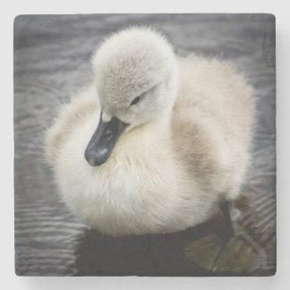 Baby Swan (Cygnet ) Stone Coaster