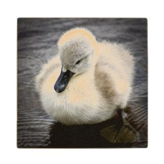 Baby Swan | Cygnet Wood Coaster