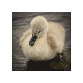 Baby Swan   Cygnet Wood Wall Art