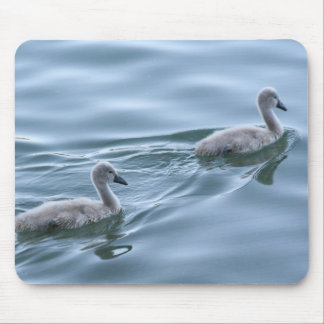 Baby swans mousepad