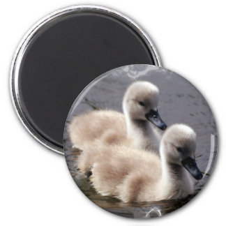 Baby Swans Round Magnet Magnets
