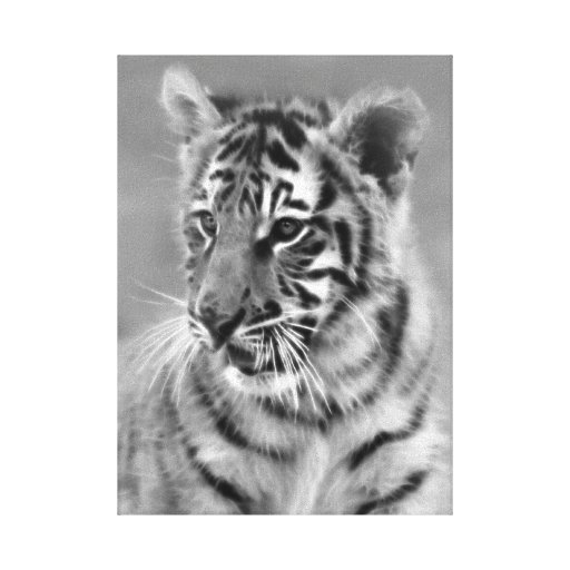 Baby Tiger in Black and white cub Canvas Print