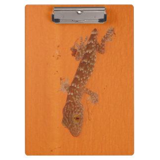 Baby Tokay Gecko Clipboard