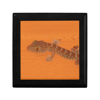 Baby Tokay Gecko Gift Box