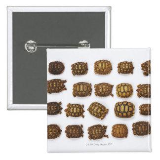 Baby tortoises arranged in rows 15 cm square badge