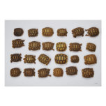 Baby tortoises arranged in rows poster
