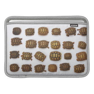 Baby tortoises arranged in rows sleeve for MacBook air