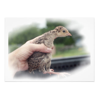 Baby turkey chick being held by a hand invite