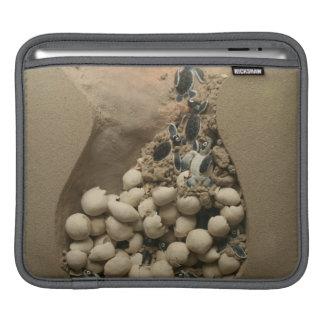 Baby Turtle Eggs Hatching iPad Sleeve