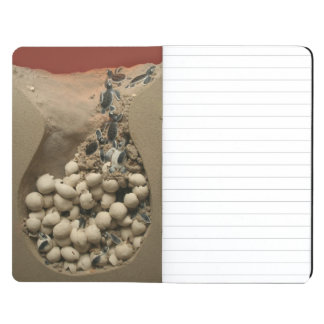 Baby Turtle Eggs Hatching Journal