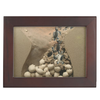 Baby Turtle Eggs Hatching Keepsake Box