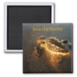 Baby Turtle Square Magnet