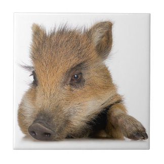Baby Warthog Small Square Tile