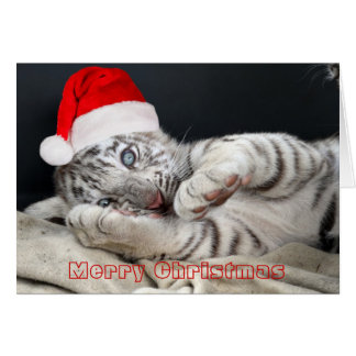 baby white bengal tiger with christmas hat greeting card