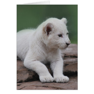 Baby white lion cub 2 greeting card