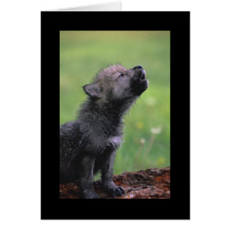 Baby Wolf Howls Cards