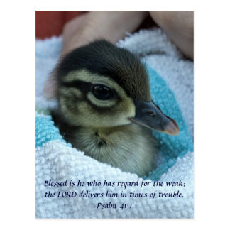Baby Wood Duck Post Card