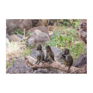 Baby Yellow Baboons Acrylic Print