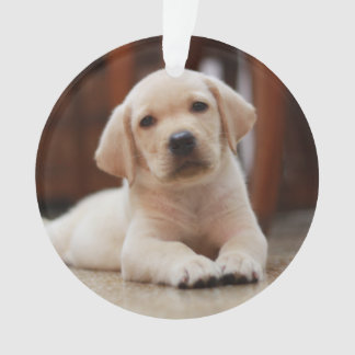 Baby Yellow Labrador Puppy Dog laying on Belly