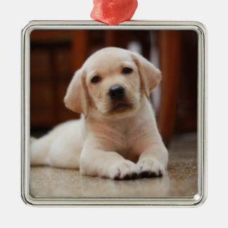 Baby Yellow Labrador Puppy Dog laying on Belly Christmas Ornament