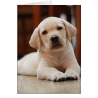 Baby Yellow Labrador Puppy Dog laying on Belly Greeting Card