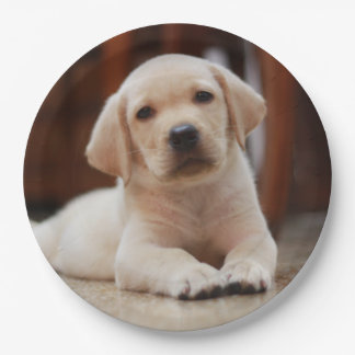 Baby Yellow Labrador Puppy Dog laying on Belly Paper Plate