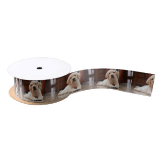 Baby Yellow Labrador Puppy Dog laying on Belly Satin Ribbon