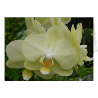 Baby Yellow Orchid Note Card