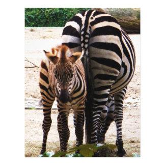 Baby Zebra 21.5 Cm X 28 Cm Flyer