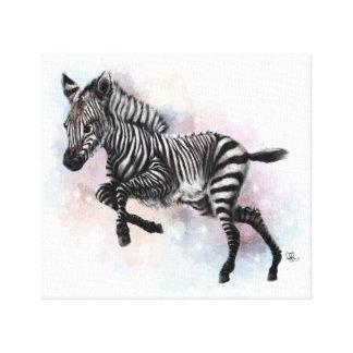Baby Zebra Canvas