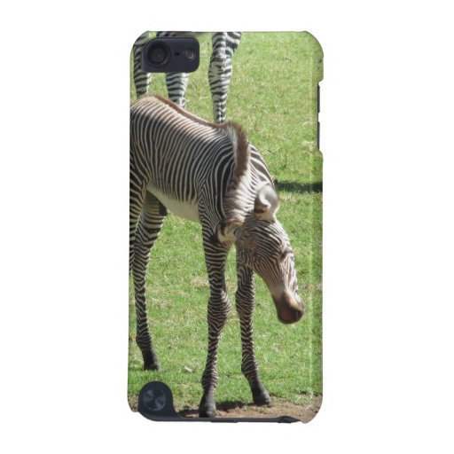 Baby Zebra iPod Touch (5th Generation) Cover
