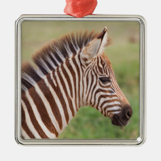 Baby zebra head, Tanzania Silver-Colored Square Decoration