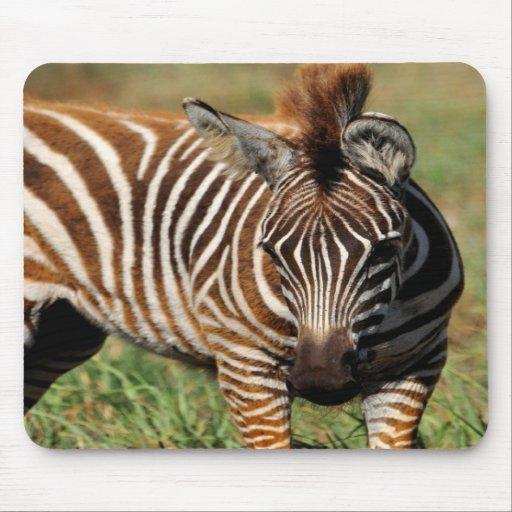 Baby Zebra Mousepad
